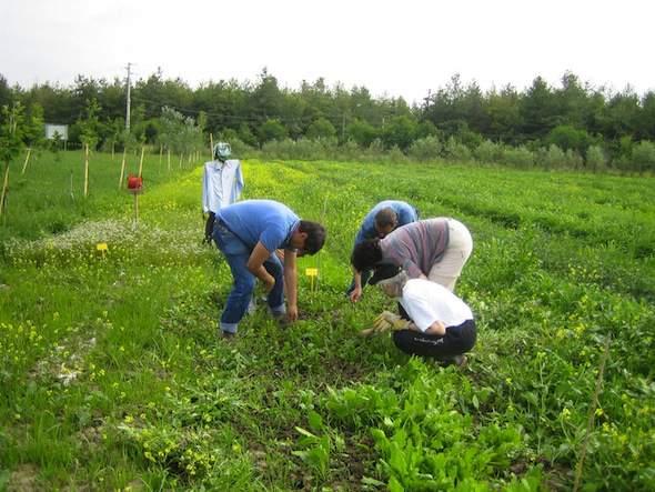 Vrijwilligerswerk in Italië vindt vaak op een boerderij plaats