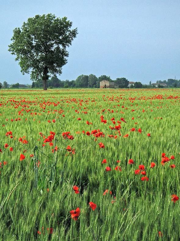 Op de Povlakte lijkt het Italiaanse landschap een beetje op het Nederlandse