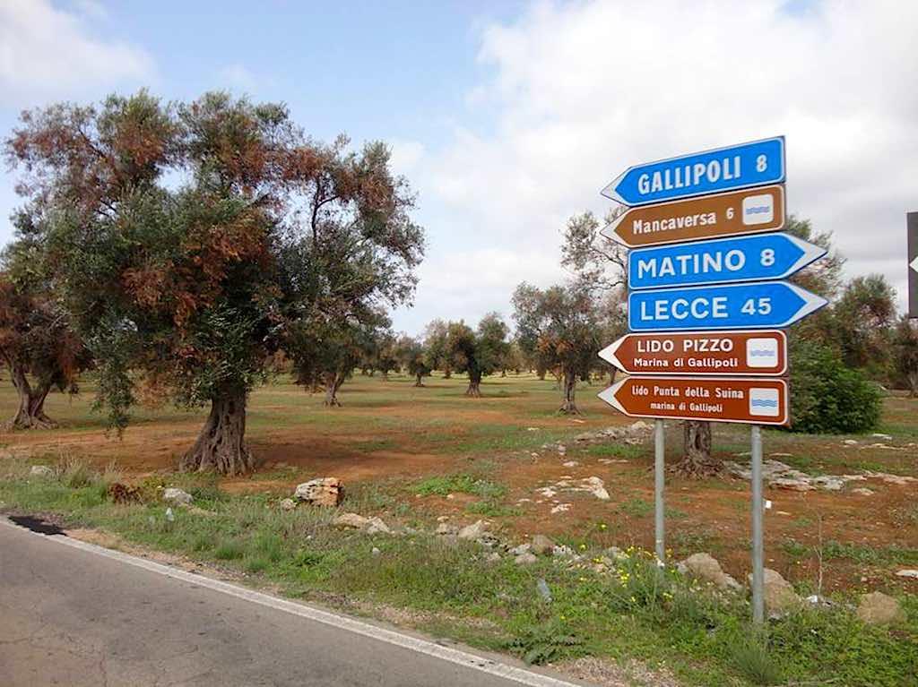 olijfbomenziekte in Italië