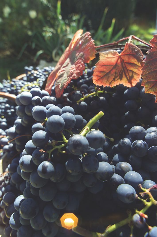 druiven-italie