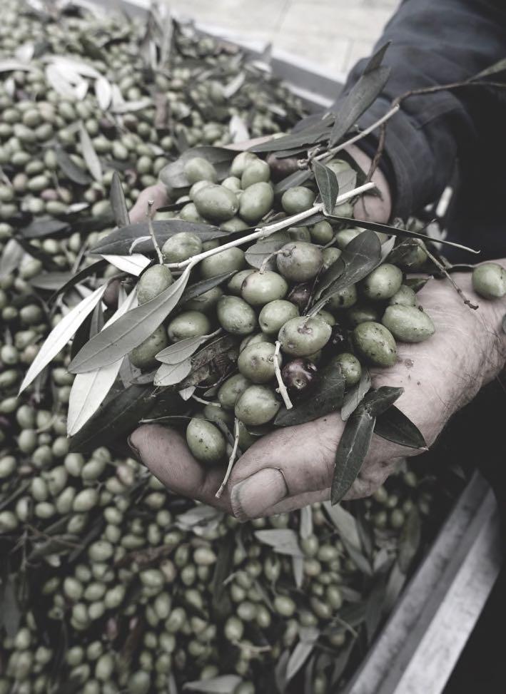 olijven-italie