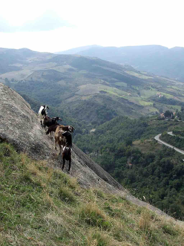 Nieuwsgierige berggeiten bij Castelmezzano