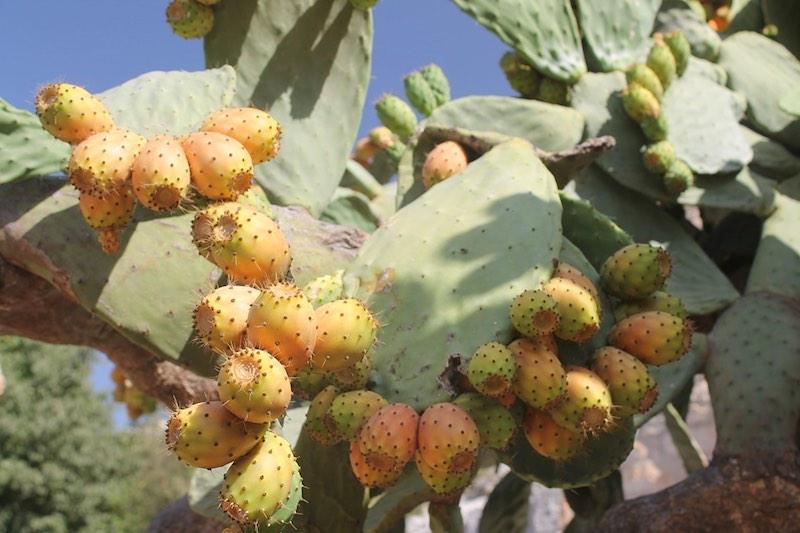 backpacken-sicilie-vruchten