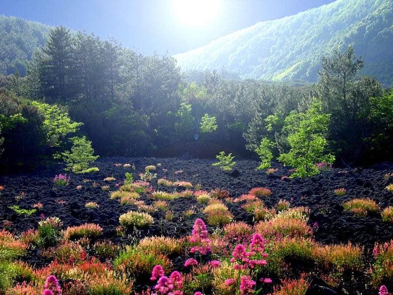 Nationaal Park Vesuvius