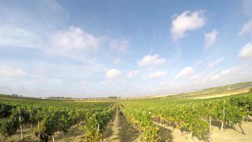 Italiaanse wijn van 2017: weinig en zwaar