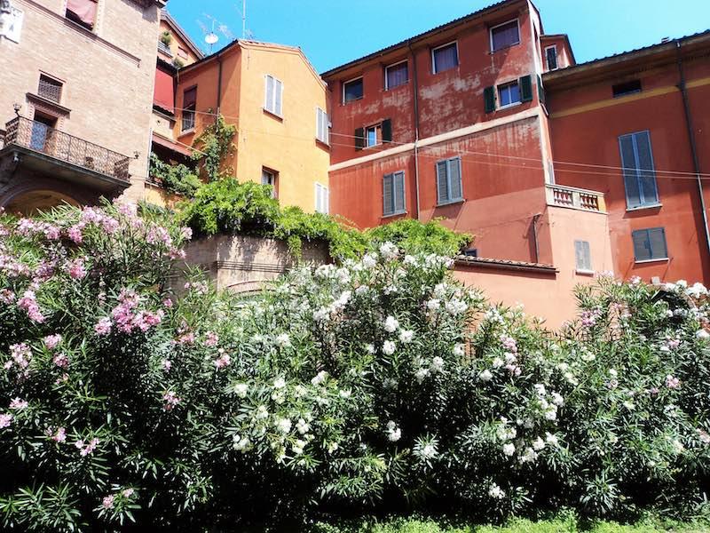 Bologna in bloei