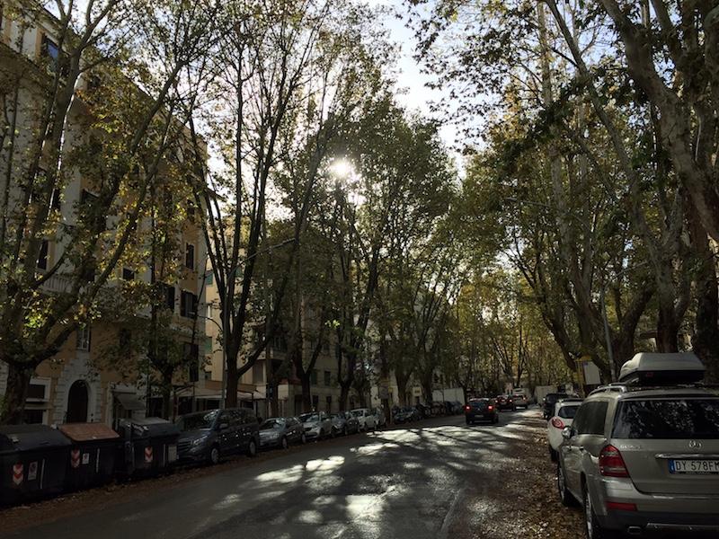 Niet gesnoeide platanen in Viale Parioli