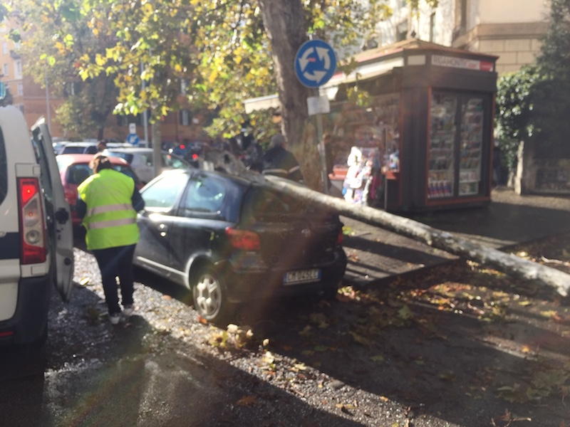 Vallende bomen door gebrek aan onderhoud in Rome