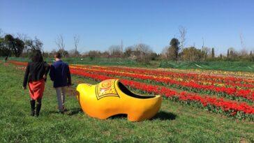 Tulipark Rome