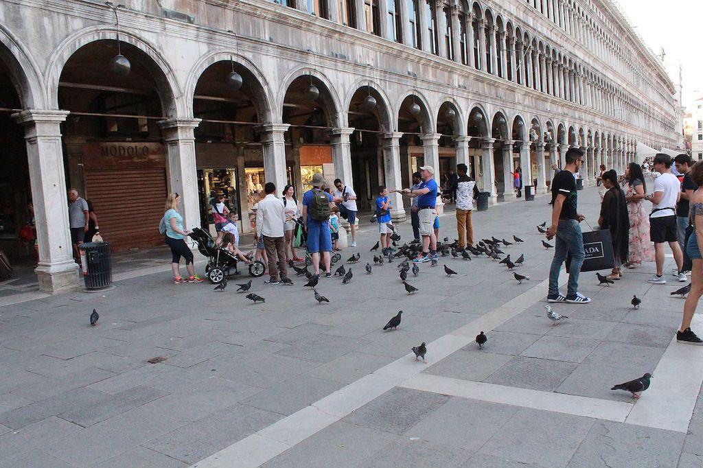 Duiven voeren op het San Marco-plein in Venetië
