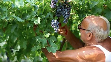 beste Italiaanse wijnstreken
