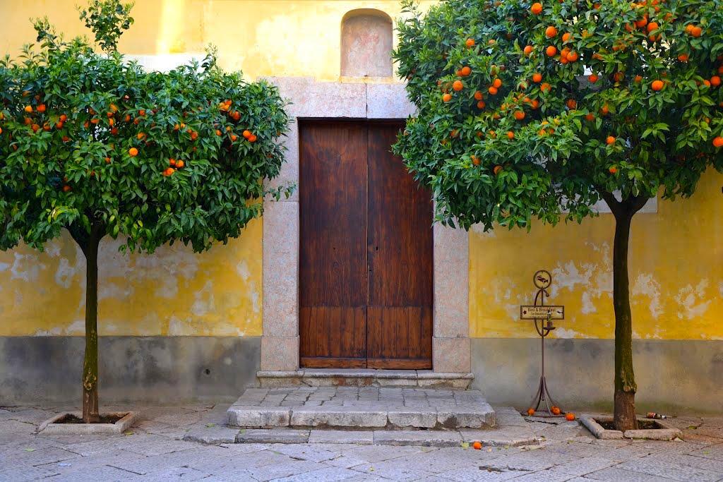 Sant'Agata dei Goti - sinaasappelbomen