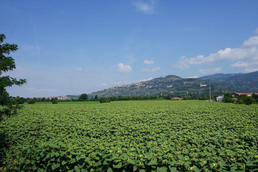 Onder de Toscaanse zon